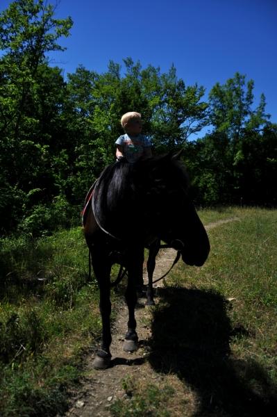 По лугам на лошадке