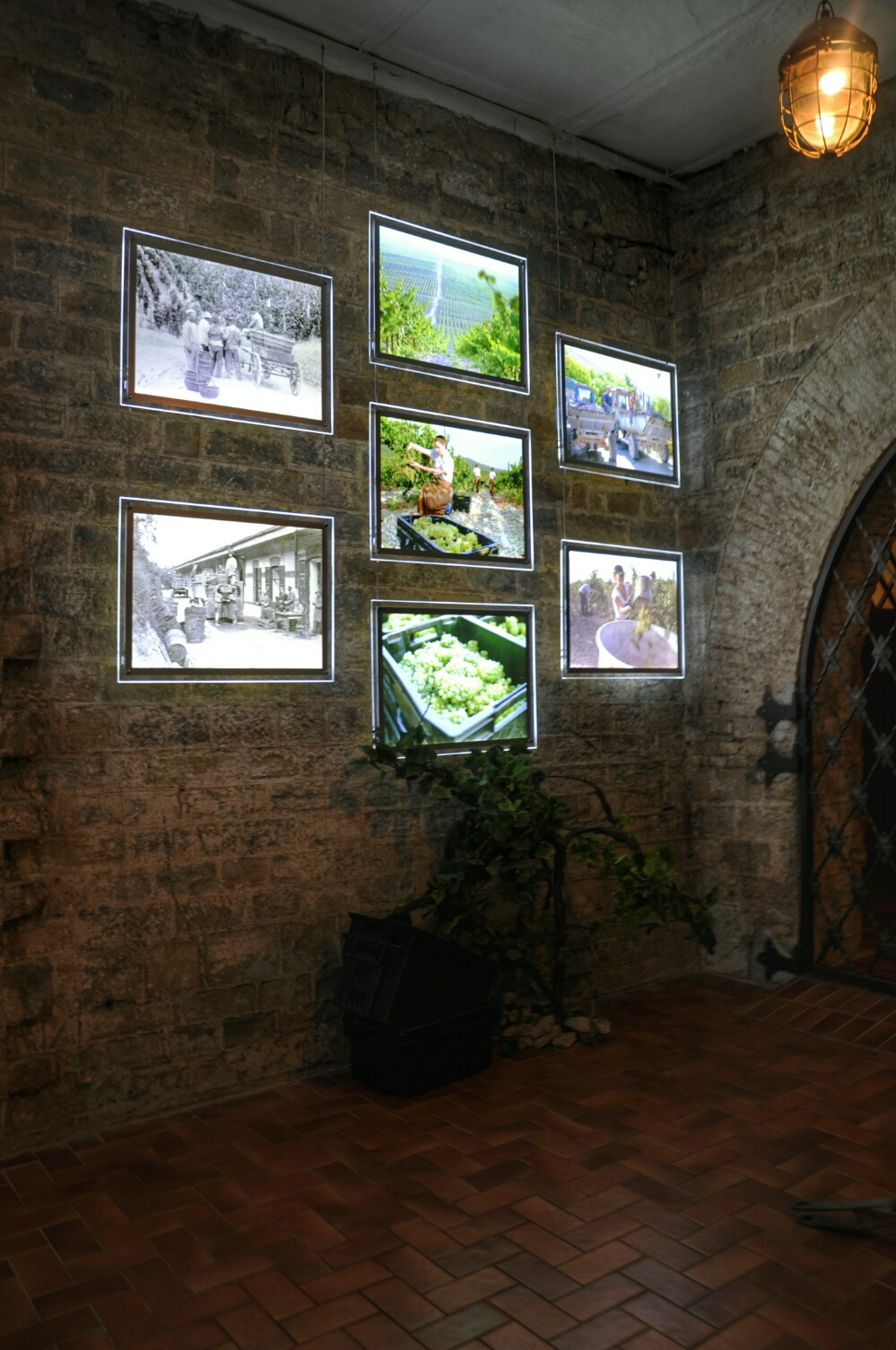 Фото архив с историей сбора винограда