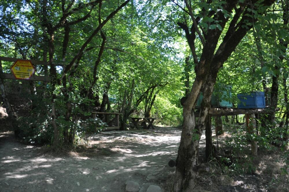 Пасека на пути к дольменам в долине Жане