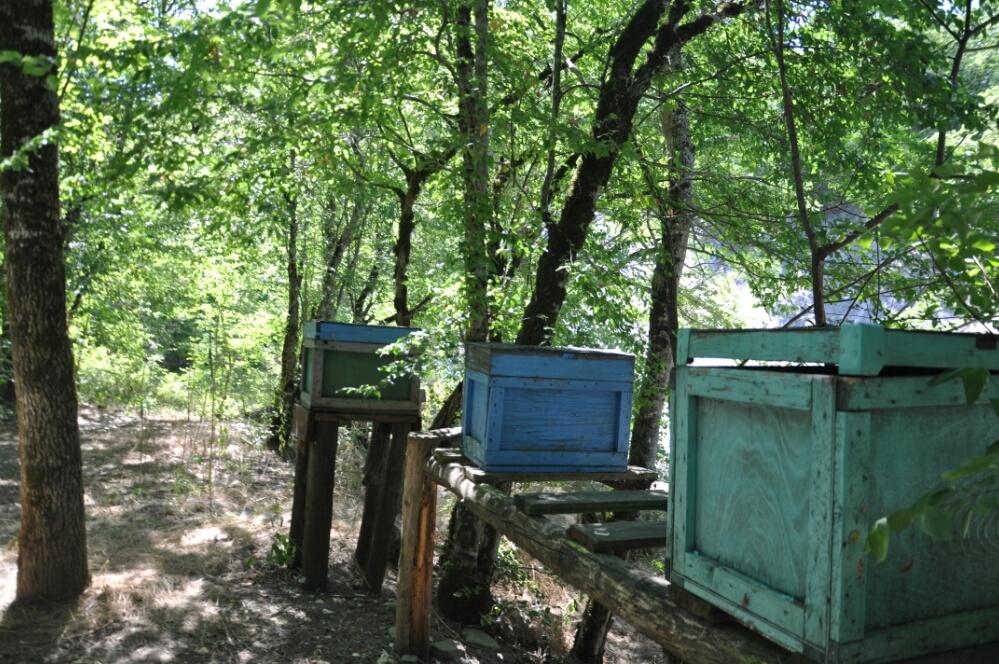 Улья на пасеке на реке Жане