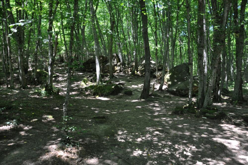 Валуны на склоне лесного холма
