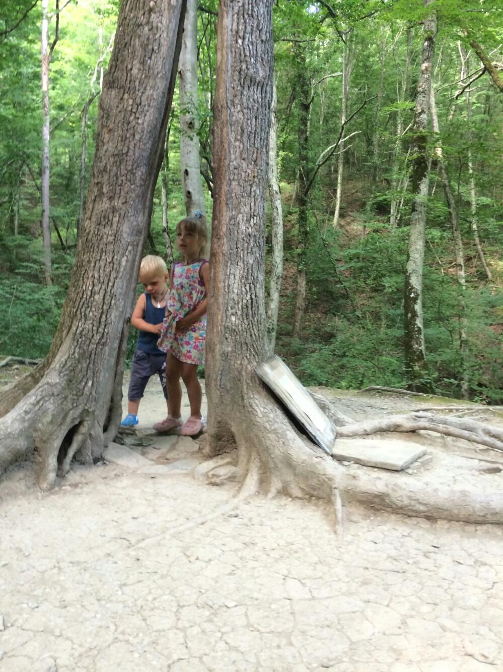 Возле дерева Желаний
