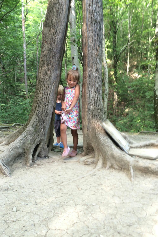 Прохожу в расщелине ствола дерева Желаний