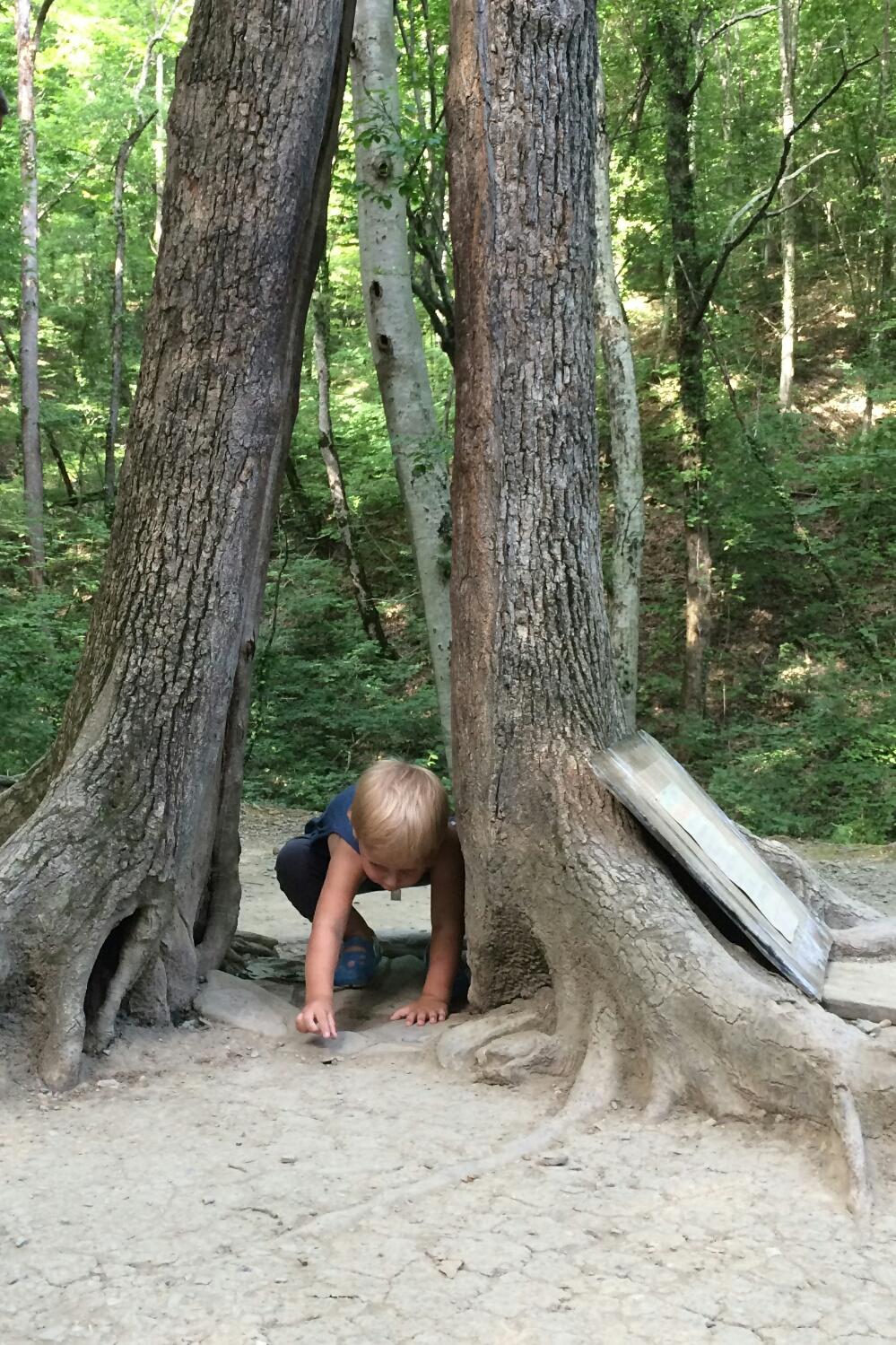 Тёма жертвует монетку дереву Желаний