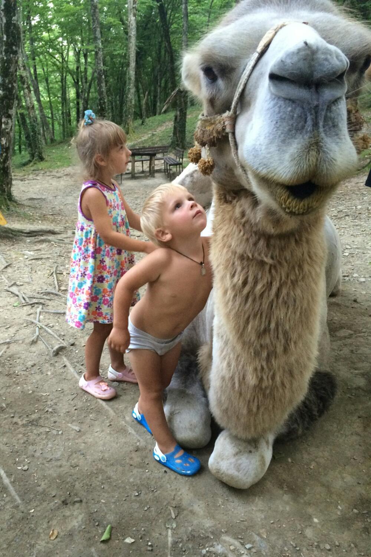 Верблюд Васька