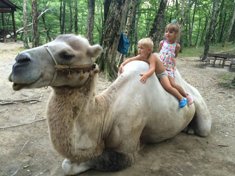 Восседаем с Тёмой на верблюде Ваське
