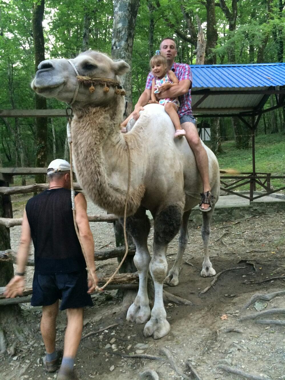 Отправляемся с папой кататься на верблюде Ваське