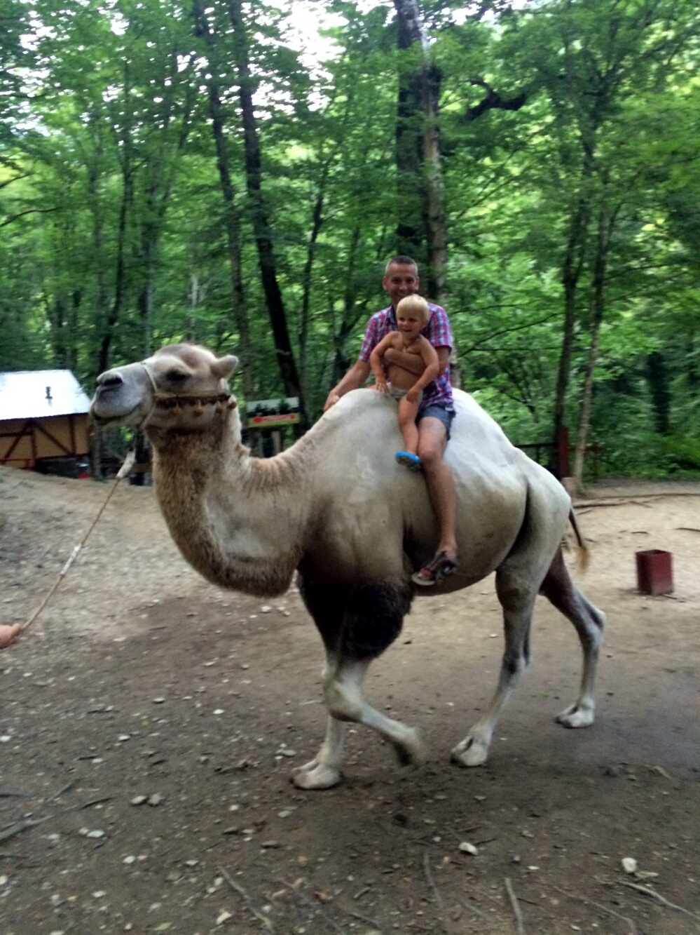 Тёма с папой катаются на верблюде