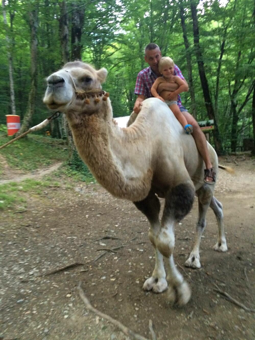 Тёма катается на верблюде с папой