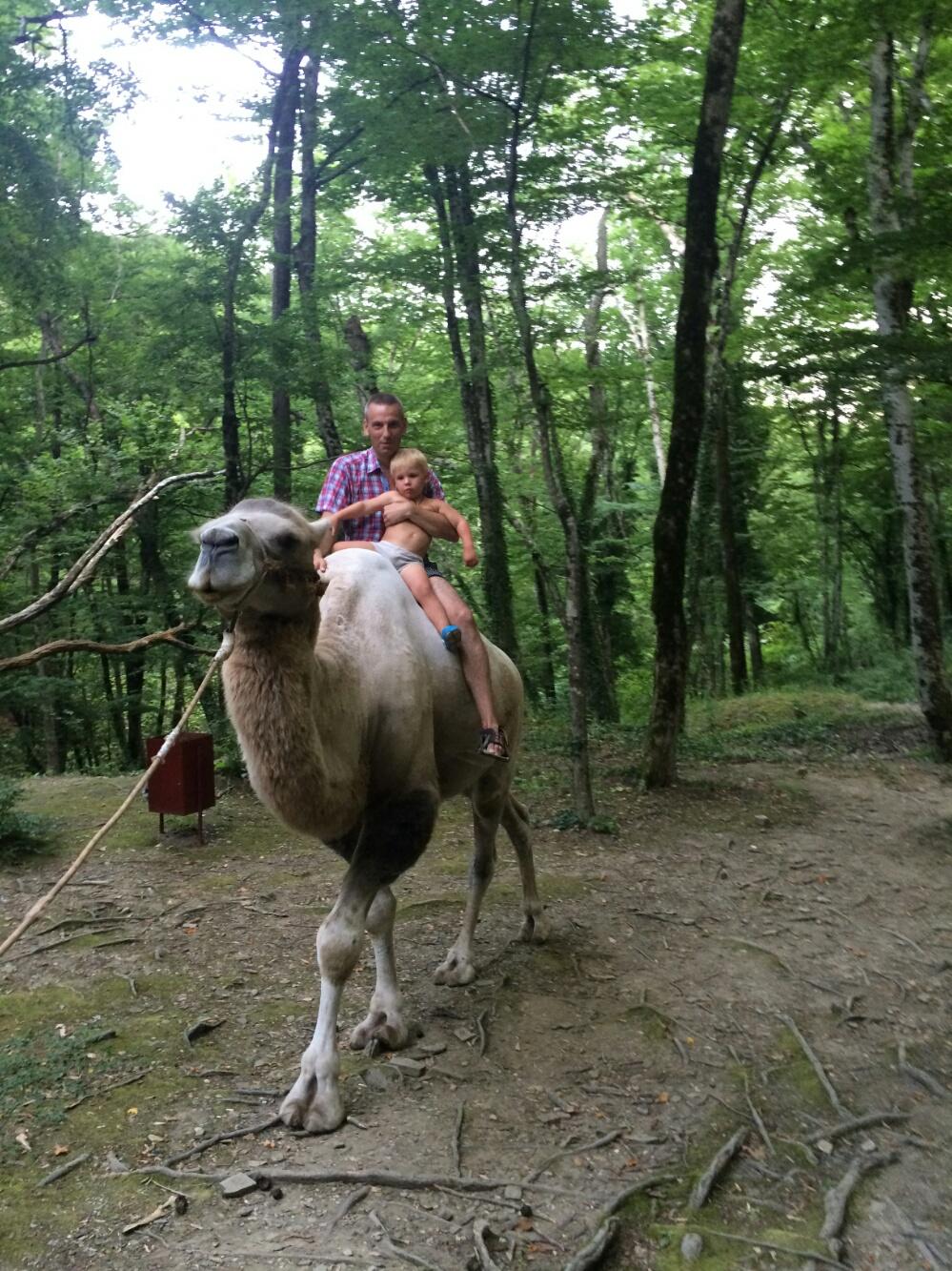 Тёмка отправляется на прогулку на верблюде