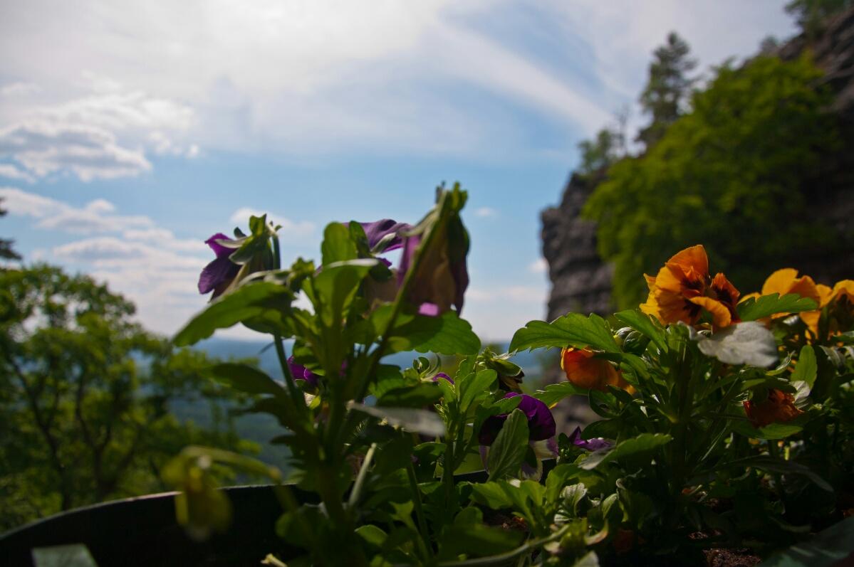 Цветы на балконе кафе «Орлиное гнездо»