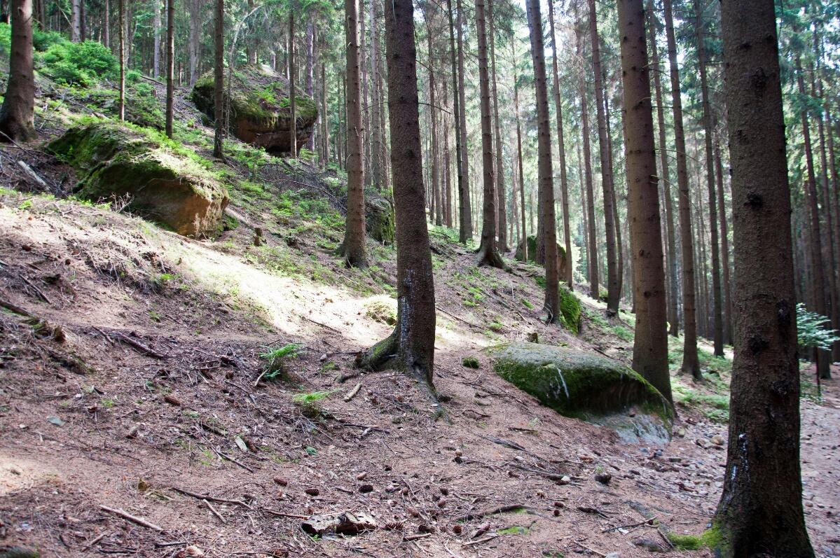 Валуны в Чешской Швейцарии