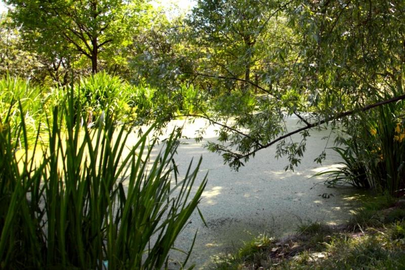 Пруд в Птржинских садах