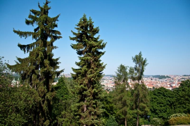 Виды Праги