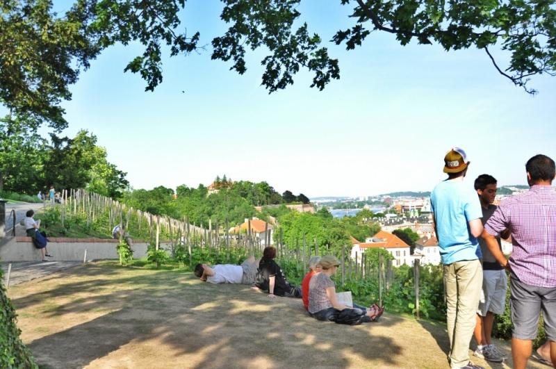 Виноградники в Праге