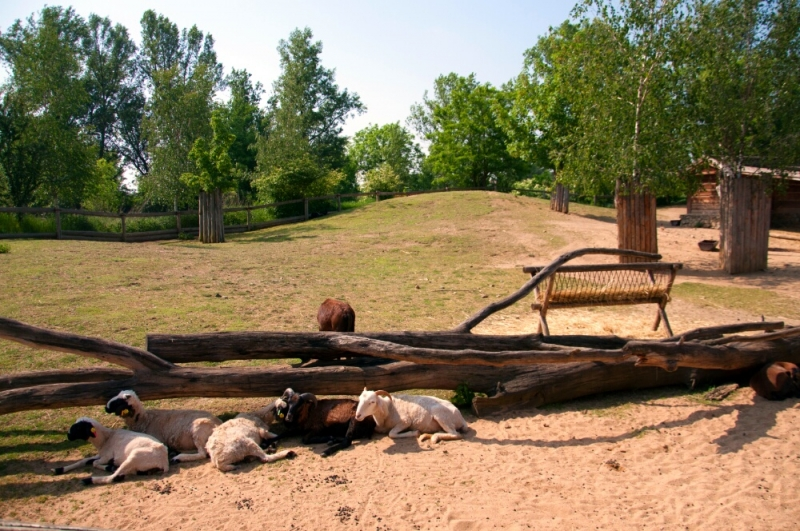 Козлята отдыхают в пражском зоопарке
