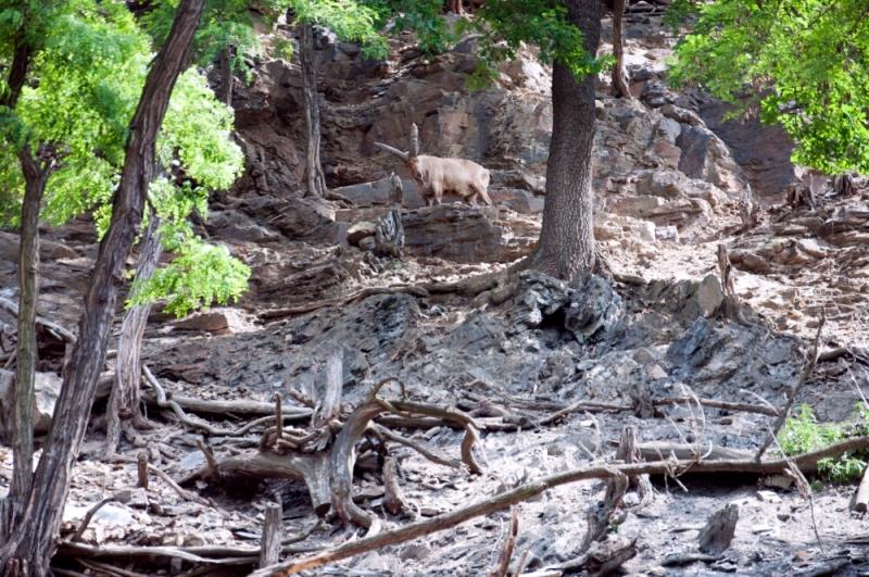 Территория горных козлов в пражском зоопарке