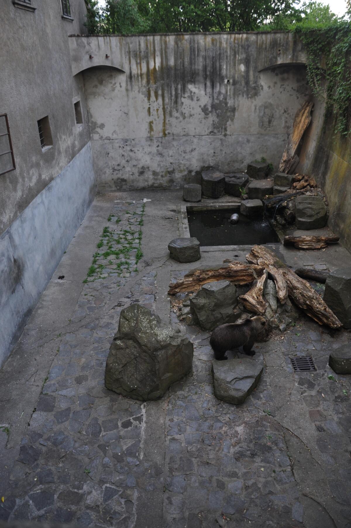 Медведи в Крумловскому замке