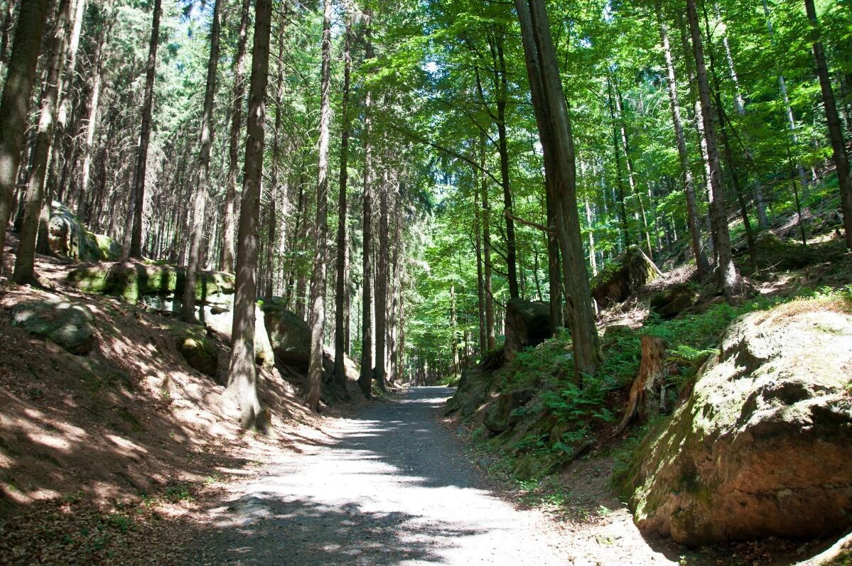 Тропа через лес к Правческим воротам