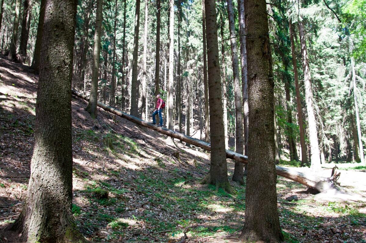 Вековой лес
