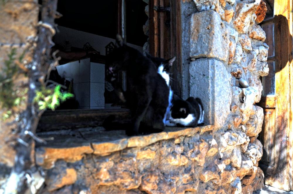 Коты на подоконнике в парке Аскос