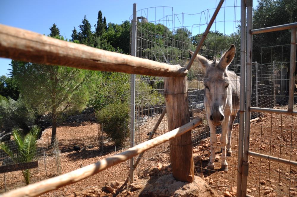 Ослик в парке Аскос