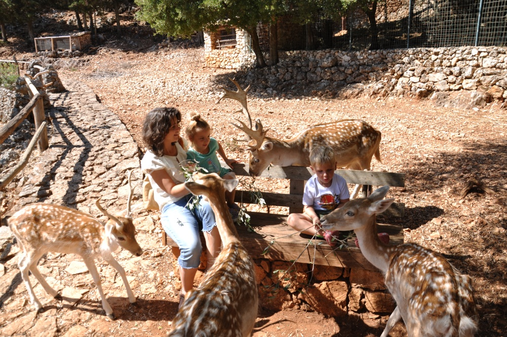 Кормим оленей в Askos Stone Park