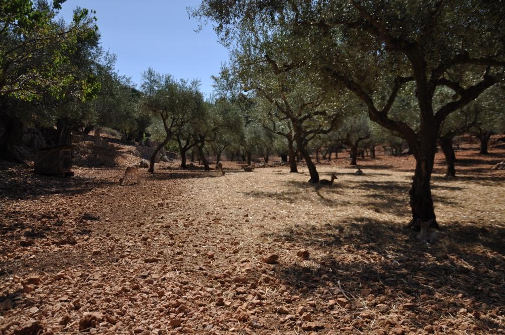 Территория оленей в парке Аскос