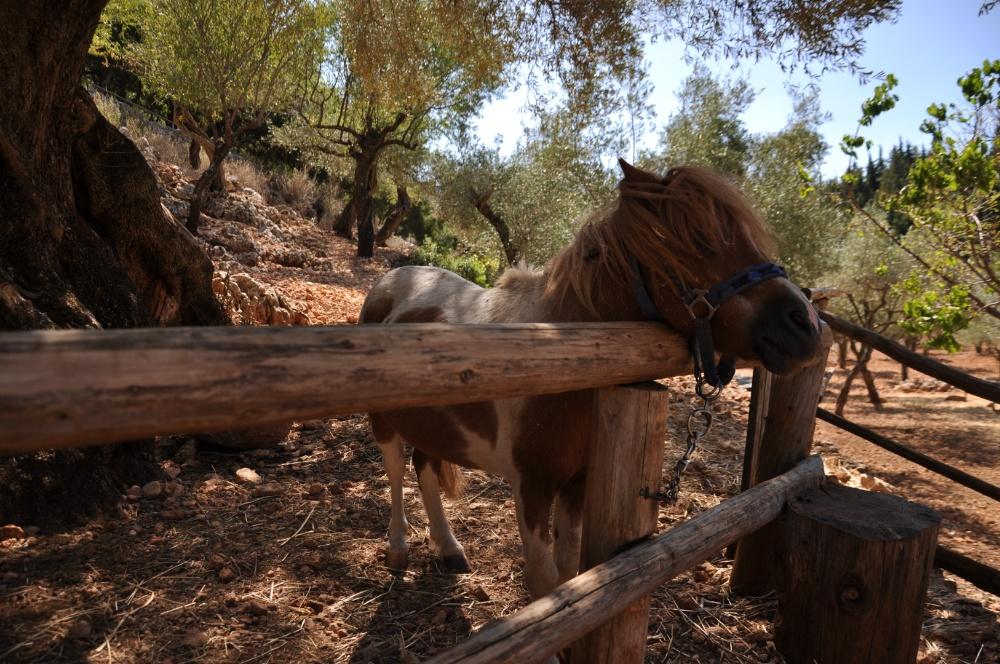 Пони в парке Askos
