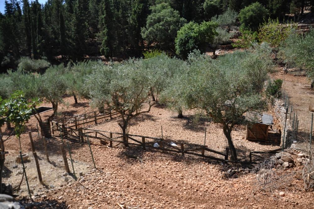 Оливковые рощи в парке Аскос