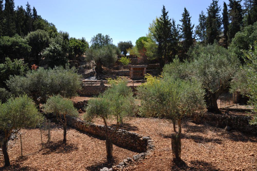 Оливковая роща в парке Askos