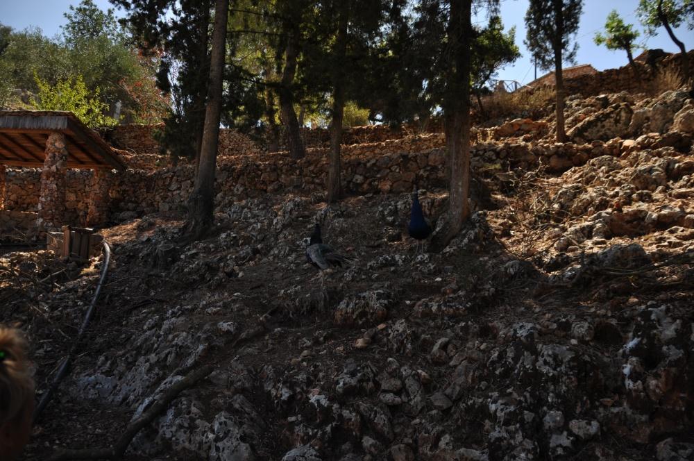Каменные склонны парка Аскос