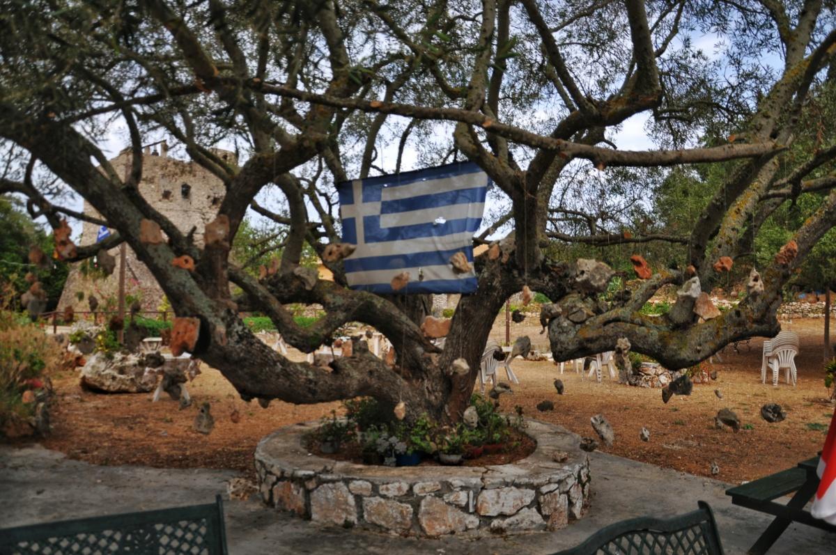 Оливковое дерево с камнями