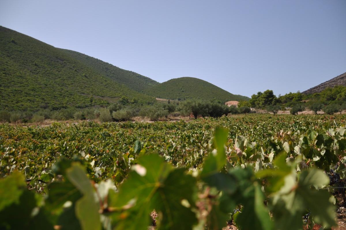 Виноградные плантации Art & Wine winery