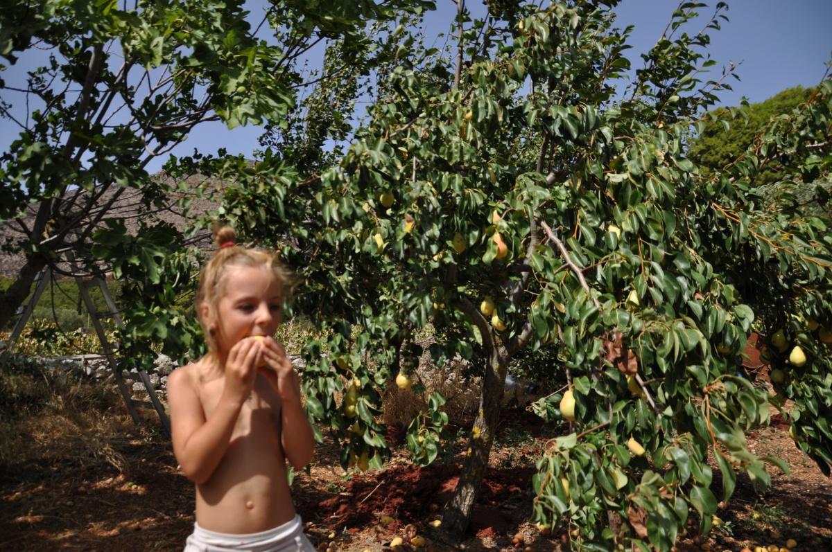Во фрукьовом саду Art & wine winery