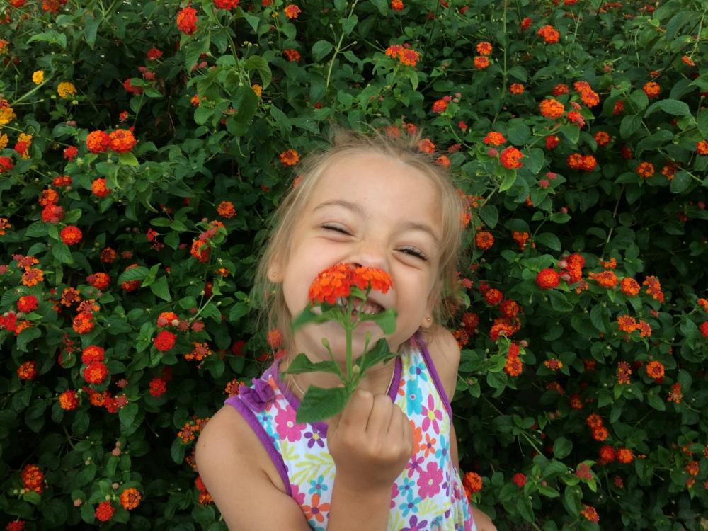 Цветочный куст в Циливи