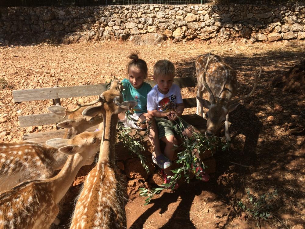 Кормим оленей в парке Аскос