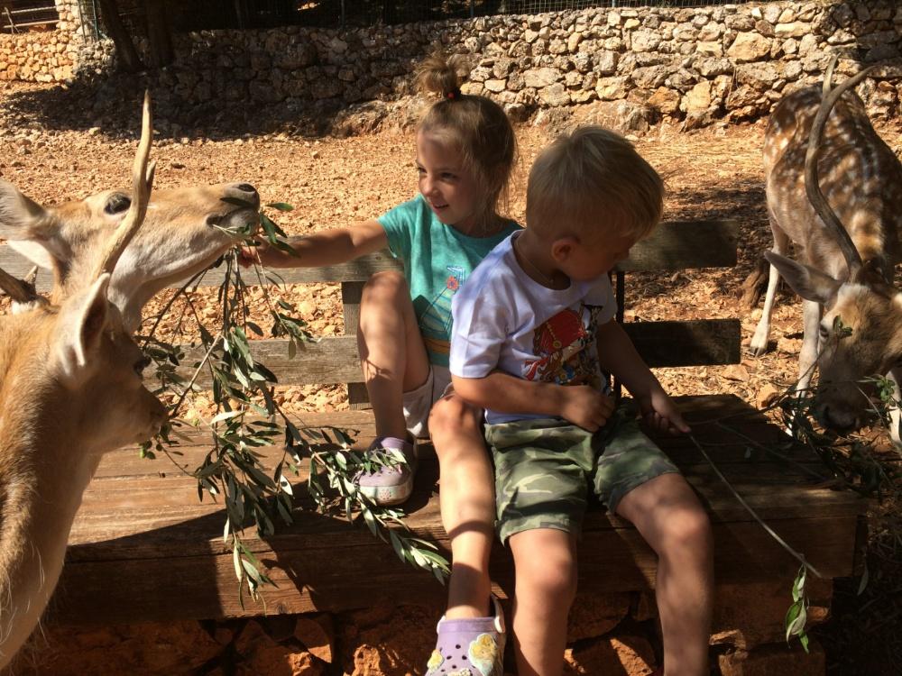 Кормим оленей в парке Askos