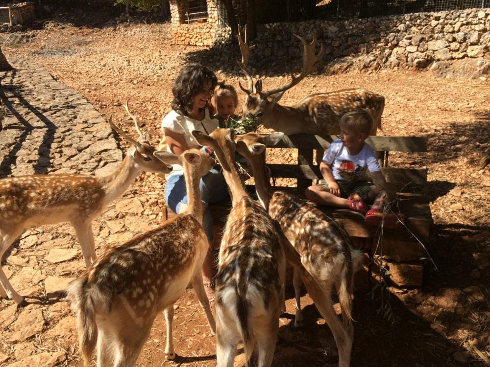 Кормим оленей в парке камней Аскос