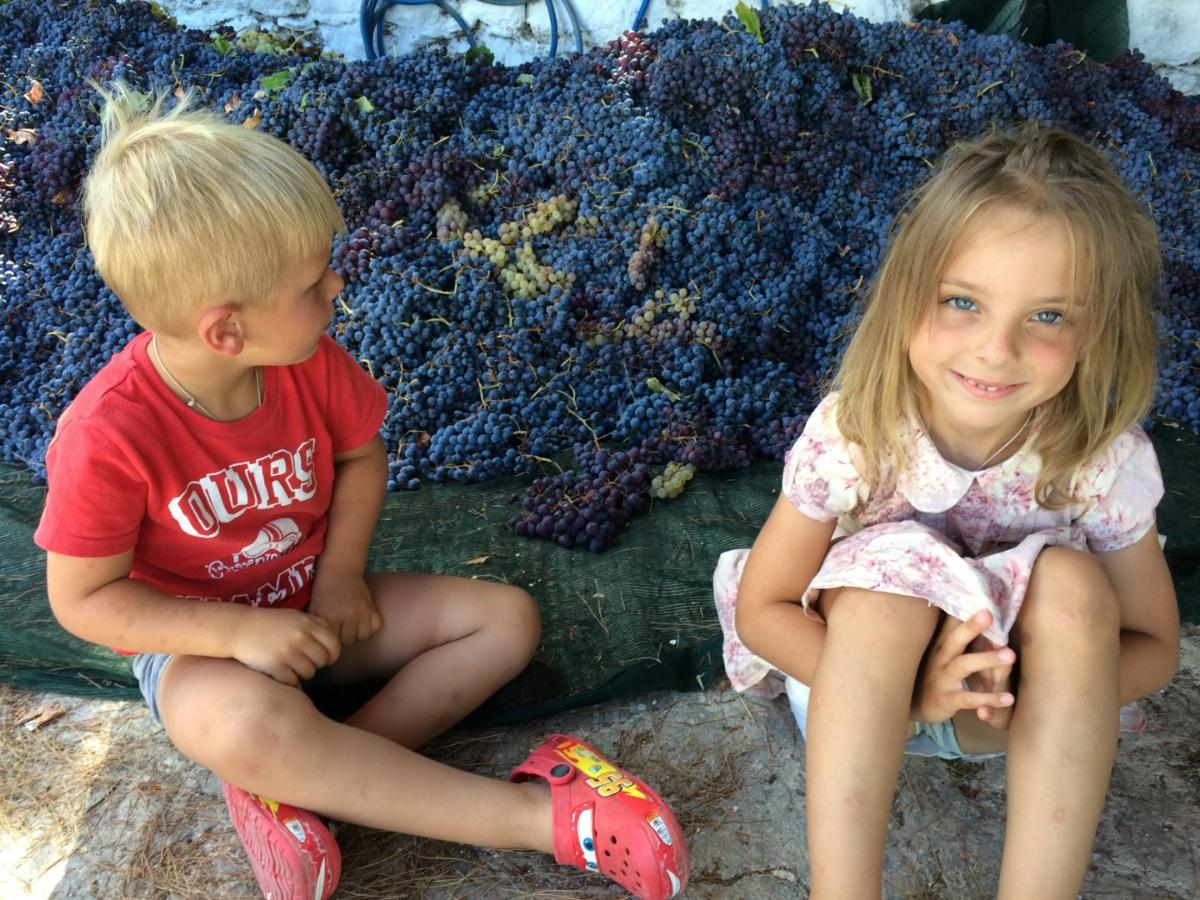В залежах винограда