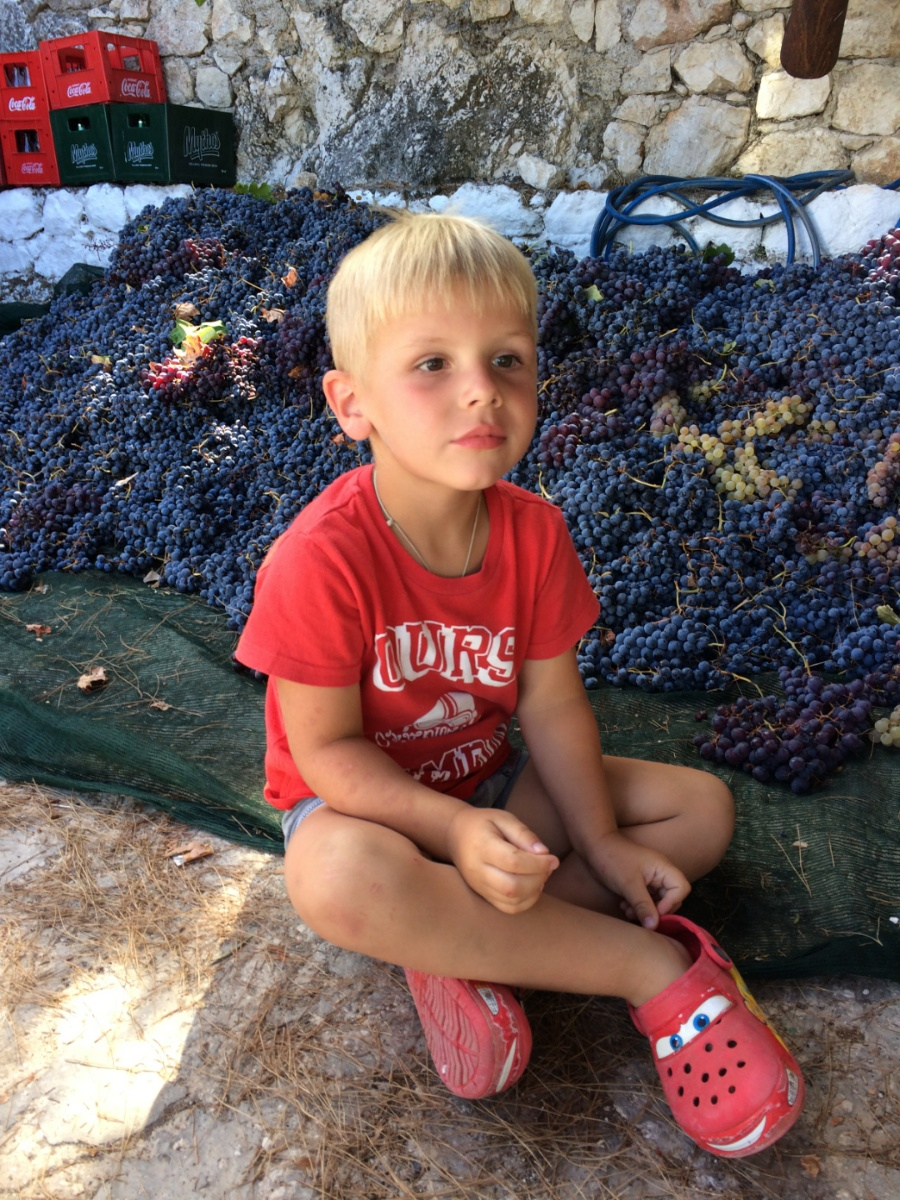 Тёмка в винограде