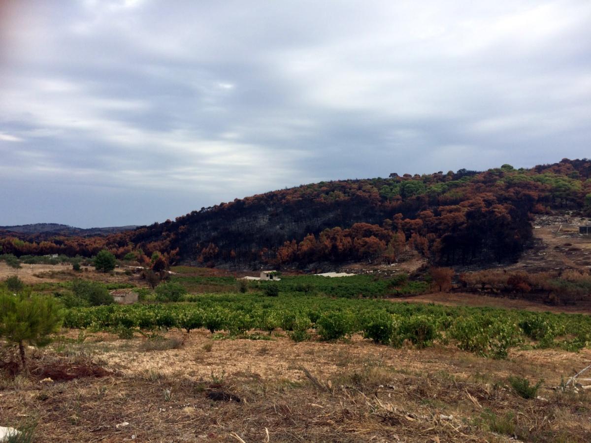 Вызженные пожаром леса острова Закинф