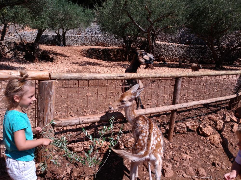 У загона с африканскими овечками в парке Askos