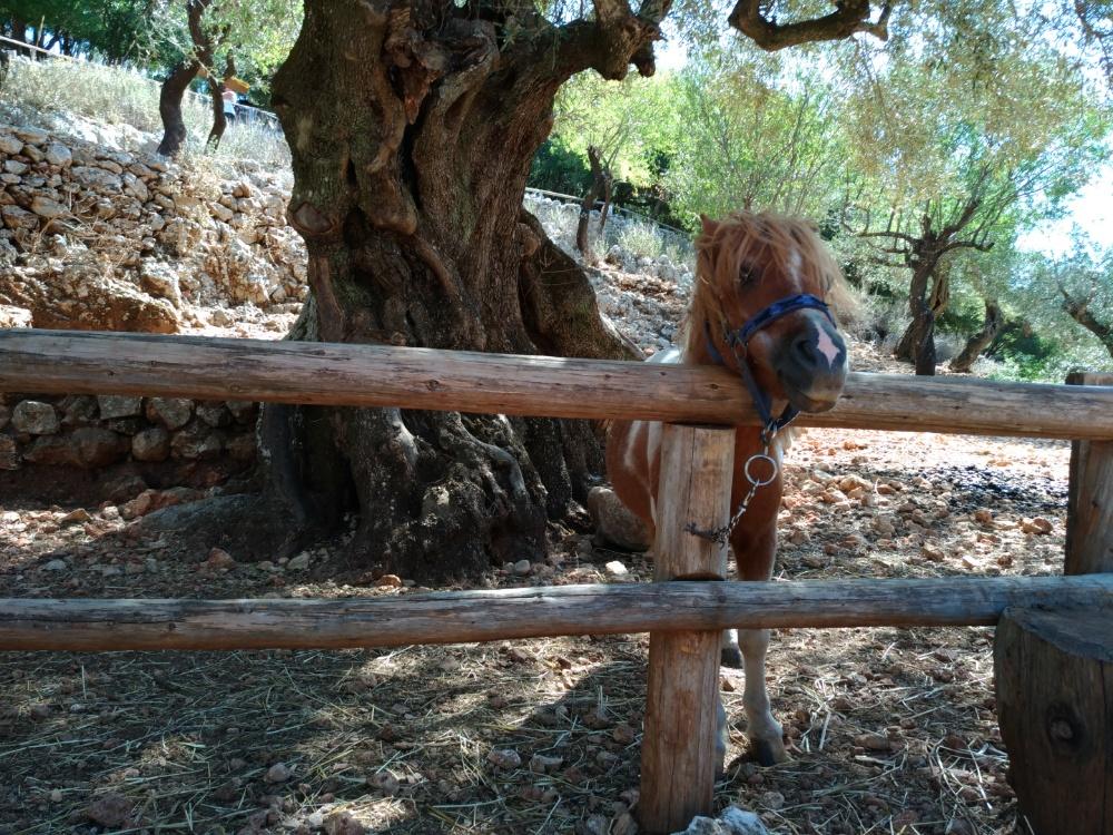 Пони в парке Аскос