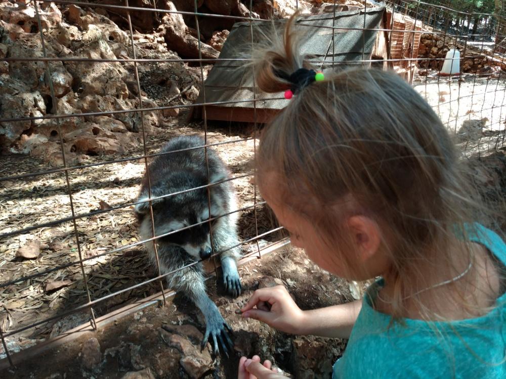 Кормлю енотиков в Askos stone park