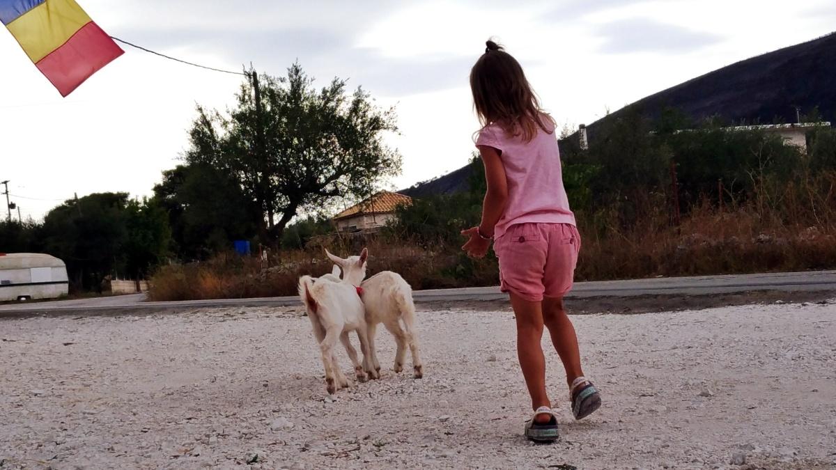Закормленые козлята спасаются от меня бегством
