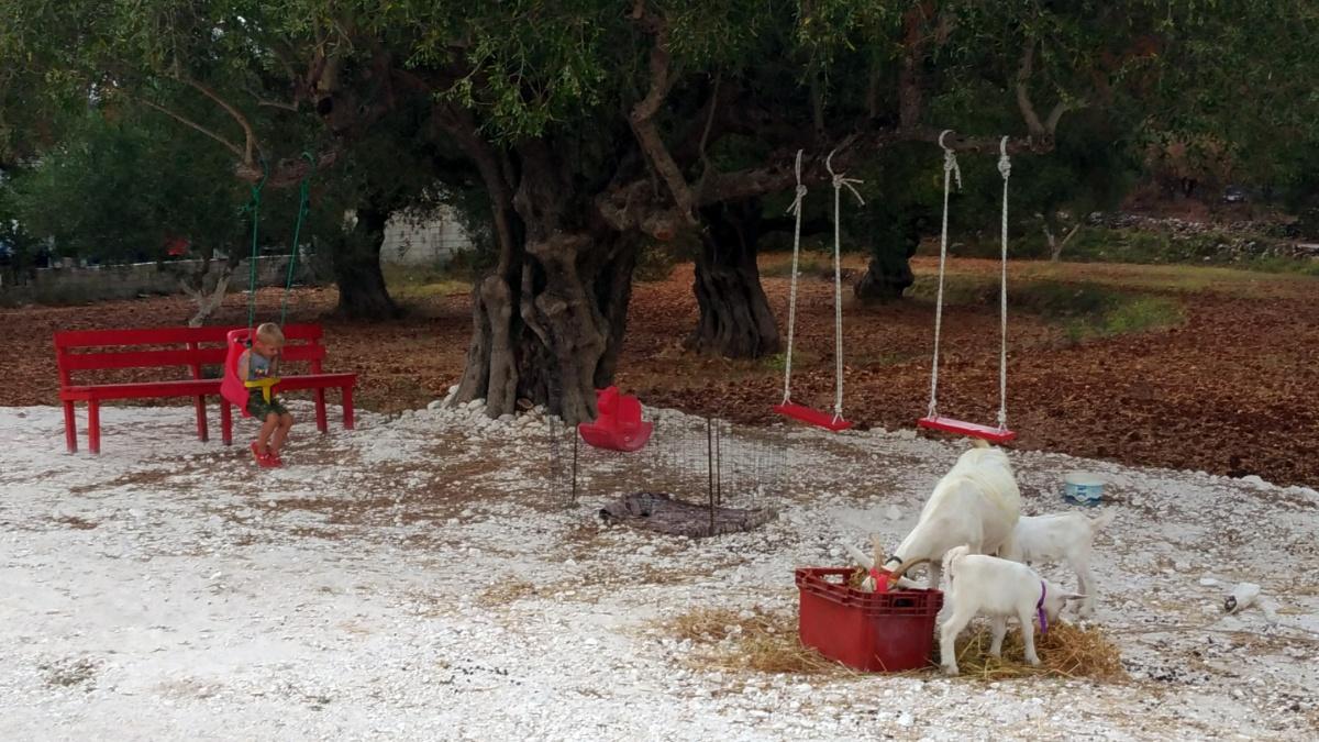 Тёмка качается на качелях рядом с пасущимися козлятами