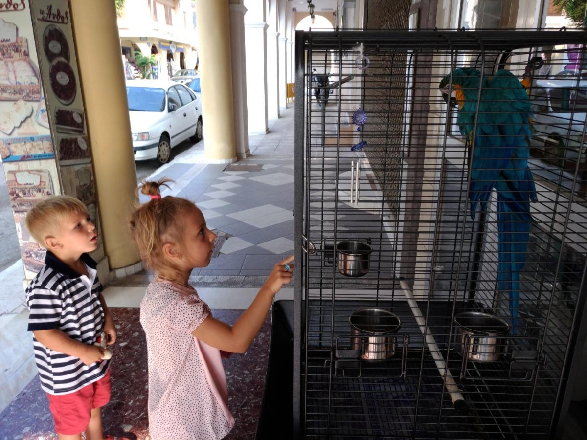 Встретели закинтосского попугая в клетке