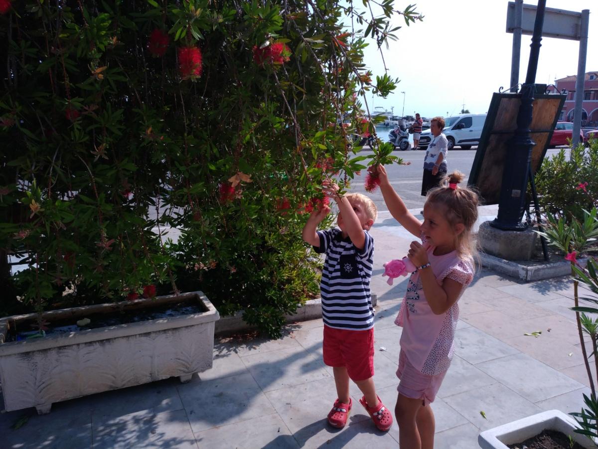 Кандалы в Закинтосе обрывают цветы