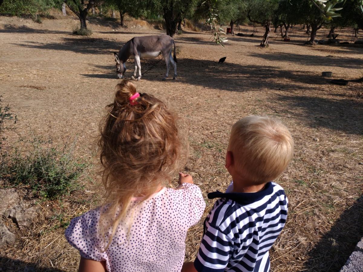 Встреча с осликом на территории таверны Lithes
